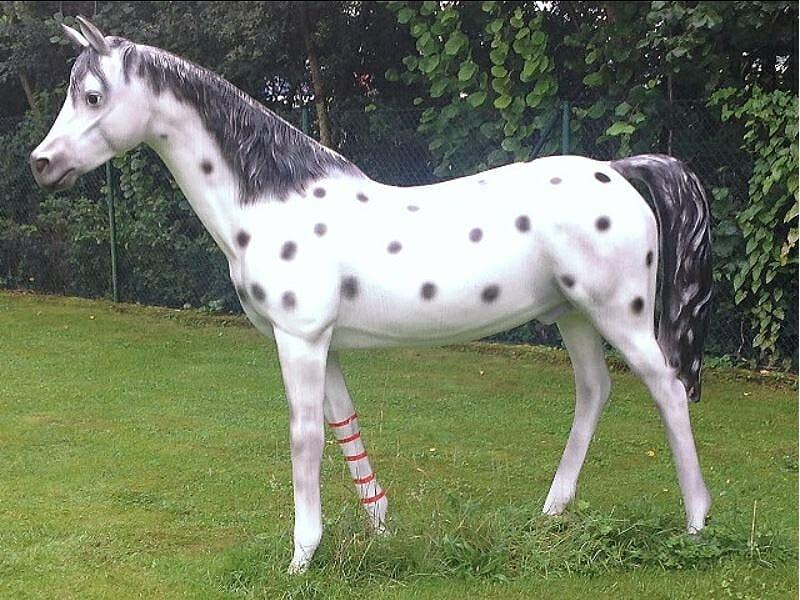 Pferd Kleiner Onkel