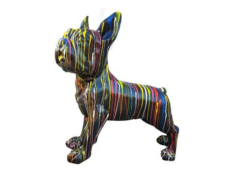 Französische Bulldogge riesig