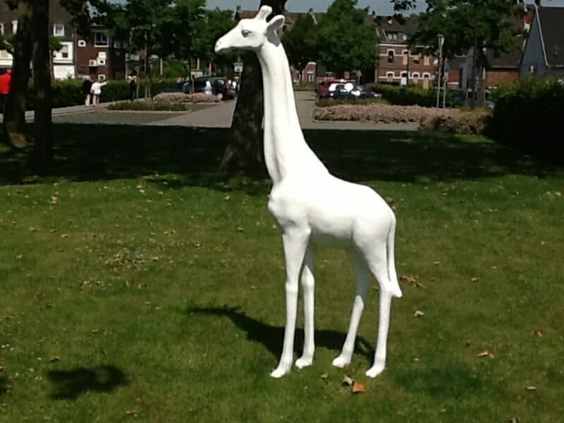 giraffe rohling