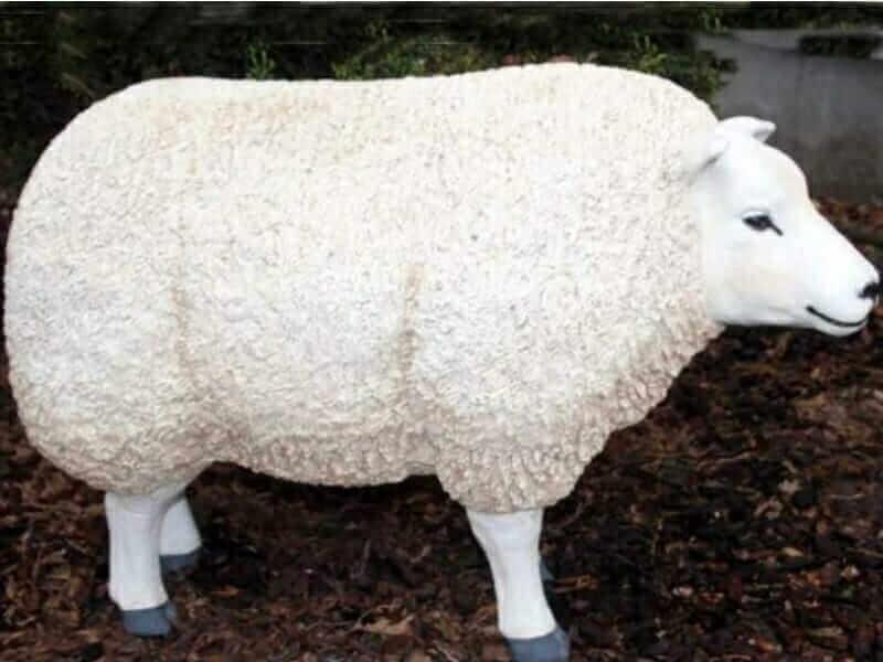 Molliges Schaf kopf gerade aus schauend
